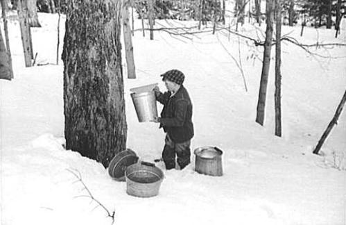 maple-sugaring-1940
